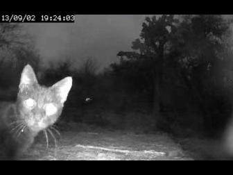 A stray cat checks out the Galápagos tortoise cam.