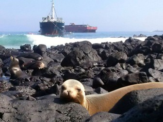 A sea lion on the rocks enjoys the sun as the failed pumping effort plays out in the background.
