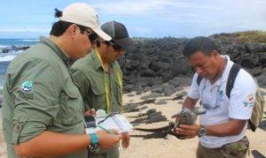Guardaparques Del Parque Nacional Galápagos Monitorean Iguanas Marinas