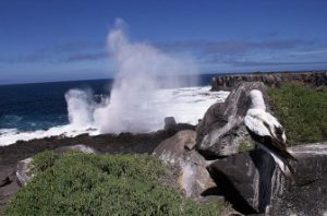 A Solitary Bird Watching The Pounding Waves In Galápagos