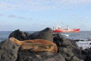 Galapaface Sea Lions