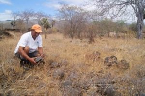 Galápagos Park Ranger Repatriates Tortoises On Santiago Island
