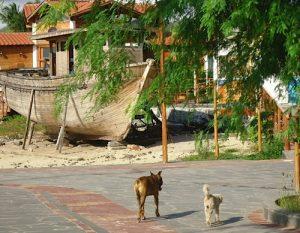 Stray Dogs On San Cristóbal/cecilia Alvear