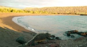 Playa Tortuga Negra On Isabela Island, Home Of The Mangrove Finches